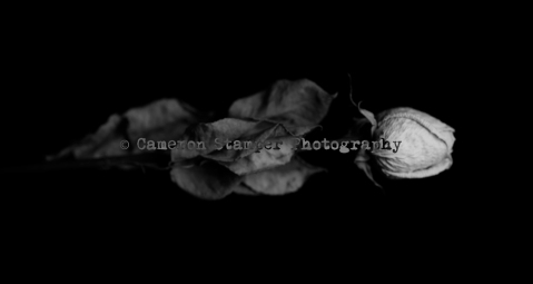 20140301_Rose-and-Boxin-One-light-Jon_0099_haunted-rose-as-Smart-Object-1